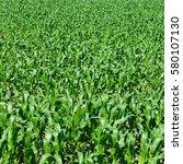 summer corn field background.... | Shutterstock . vector #580107130