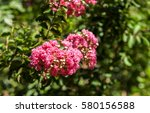 red flowers on tropical tree | Shutterstock . vector #580156588