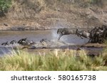 Wildebeests Mara River Crossing