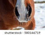 the nostrils of horses | Shutterstock . vector #580166719