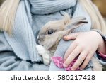 Stock photo little girl playing with grey rabbit outdoor children feeding animal family with animals 580217428
