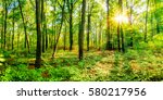 bright sunshine in the forest | Shutterstock . vector #580217956