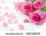 tree rose on white - stock photo