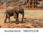 Small photo of African forest elephant in a zoo in Thailand.