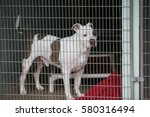 Dog In Jail. A Sad Dog In An...