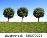 Three Round Tree On The Green...