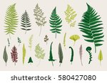 set ferns. vintage vector...
