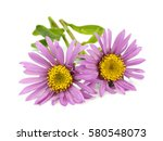 aster flowers on a white... | Shutterstock . vector #580548073
