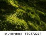 fresh green moss covering a... | Shutterstock . vector #580572214