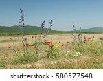 wild flowers growing in the... | Shutterstock . vector #580577548