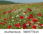 brightly coloured poppies and... | Shutterstock . vector #580577614