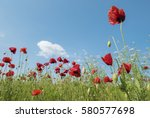 brightly coloured poppies and... | Shutterstock . vector #580577698