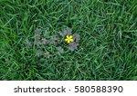 Single Tiny Yellow Wild Flower...