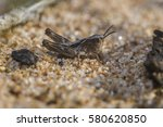 Little Grasshopper The Size Of...