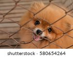 lonely dog in cage | Shutterstock . vector #580654264