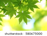 leaves of fresh green. leaves... | Shutterstock . vector #580675000