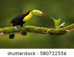 keel billed toucan  ramphastos... | Shutterstock . vector #580722556