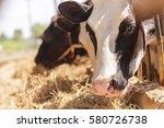 cows in farm | Shutterstock . vector #580726738
