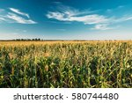Green Maize Corn Field...