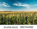 Green Maize Corn Field...