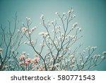 pink flowers   Shutterstock . vector #580771543