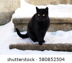 Stock photo black cat 580852504