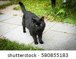 Stock photo black serious cat 580855183