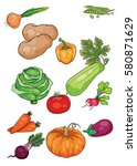 set of ripe vegetables and root ...   Shutterstock .eps vector #580871629