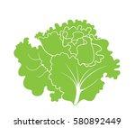 green lettuce. isolated lettuce ... | Shutterstock .eps vector #580892449