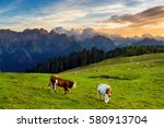 A Herd Of Cows Grazing On A...