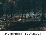 one red deer stag with doe in... | Shutterstock . vector #580926934