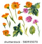 The Watercolor Set Of Marigold...