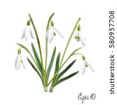 The First Snowdrops Galanthus...