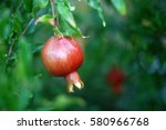 red ripe pomegranate on the... | Shutterstock . vector #580966768