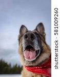 german shepherd with a red... | Shutterstock . vector #581009260