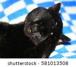 Face Of A Black Cat Close Up....