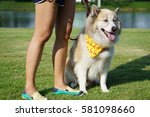 closed up of dog wearing yellow ... | Shutterstock . vector #581098660