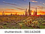 saguaros at sunset in sonoran... | Shutterstock . vector #581162608