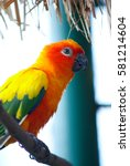 A Beautiful Colourful Parrot ...