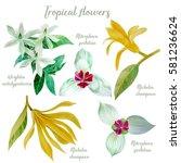 Tropical Flowers Watercolor ...