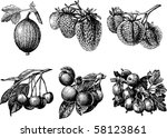 fruits and berries | Shutterstock .eps vector #58123861