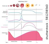 the menstrual cycle  showing...   Shutterstock .eps vector #581258560