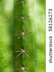 Texture With Green Spiny Cactus