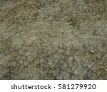 Small photo of dry soil with porcupine aculeus