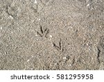 Seagull's Prints On The Sand A...