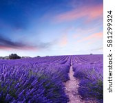 lavender field summer sunset... | Shutterstock . vector #581299324