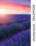 lavender field summer sunset... | Shutterstock . vector #581299348