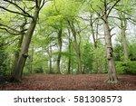 spring beech tree woods | Shutterstock . vector #581308573
