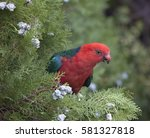 "Small photo of king Parrot "" Alisterus "" Australian native bird Male"