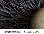 Mushroom Macro Shot